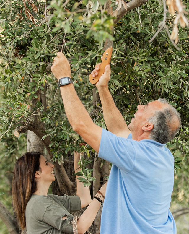 Taking Care of an Olive Tree