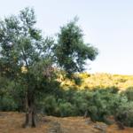 Visit Lesvos